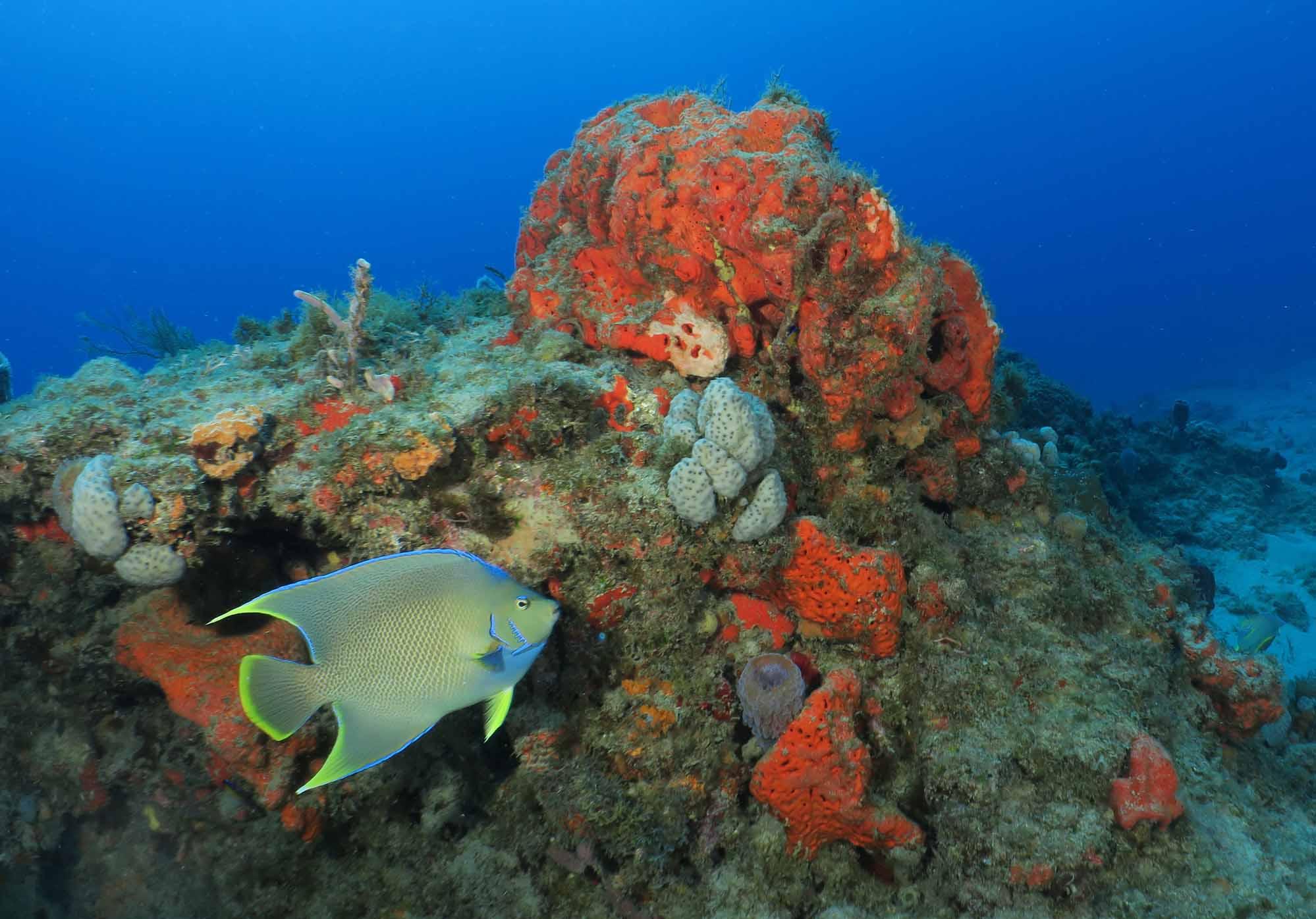 Photos - SCUBA Diving Florida