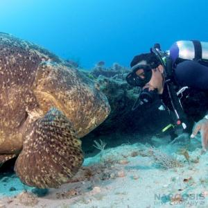 Captain Alex Edwards and a goliath grouper named Shadow